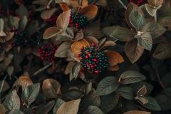 MP0005-4k-wallpaper-autumn-autumn-colors-1379636