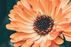 MP0007-4k-wallpaper-beautiful-bloom-2081700