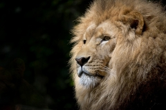 MP0034-africa-african-animal-33045