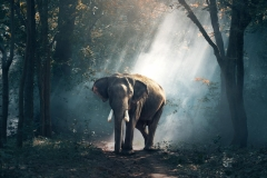 MP0053-animal-photography-daylight-elephant-247431