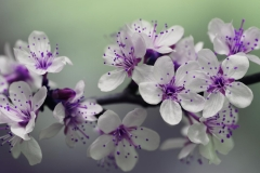 MP0089-beautiful-bloom-blooming-132474