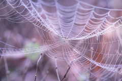 MP0114-blur-close-up-cobweb-217877