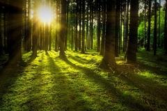 MP0155-forest-grass-green-1125776