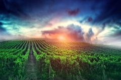 MP0161-stockvault-cloudy-sunrise-over-the-vineyard206605