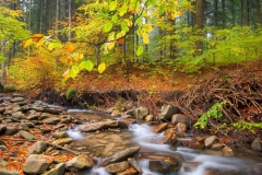 MP0173-stream-forest-fall-leaves-20181003a2509_FPX