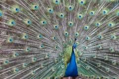 MP0201-animal-animal-photography-beautiful-53184