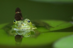 MP0202-animal-butterfly-close-up-45863